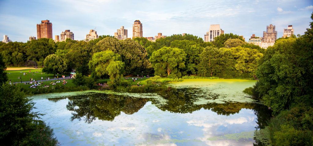 Benefits and challenges of urban forests